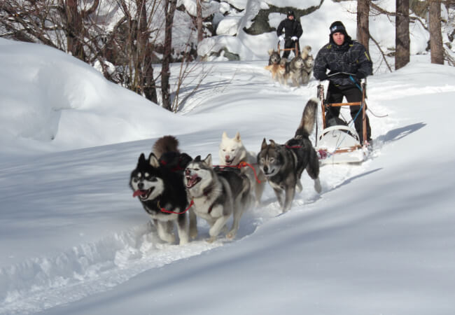 Man with sled dogs running and sledding through snow